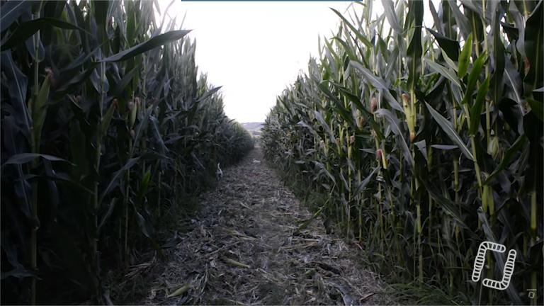 Agriculture : Stéphane LE FOLL découvre le maïs de 5m en Sol Vivant chez Christian ABADIE