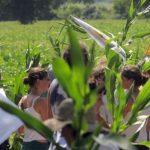 Les OGM : petit miracle ou gros désastre ?