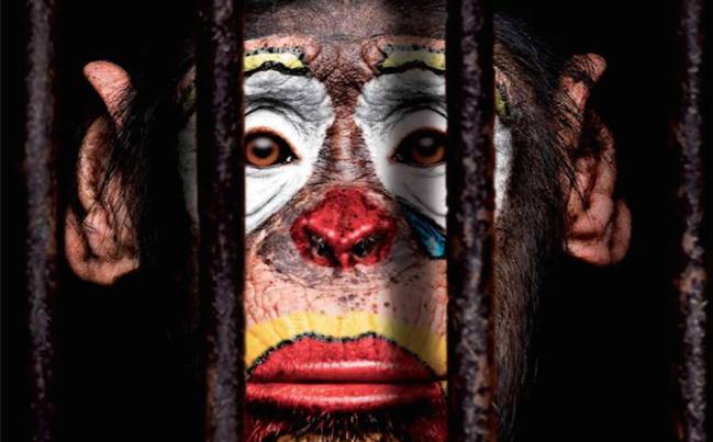 Les animaux de cirque, un spectacle devenu intolérable