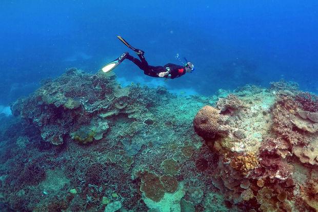 Hécatombe «catastrophique» de coraux dans la Grande barrière