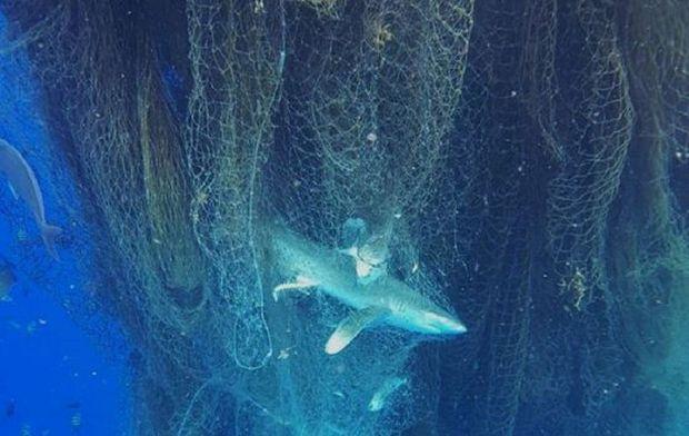 Des centaines d'animaux marins retrouvés morts dans un filet de pêche fantôme
