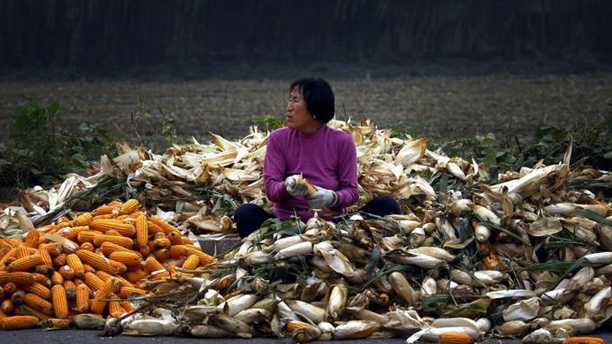 20% des terres agricoles chinoises sont polluées