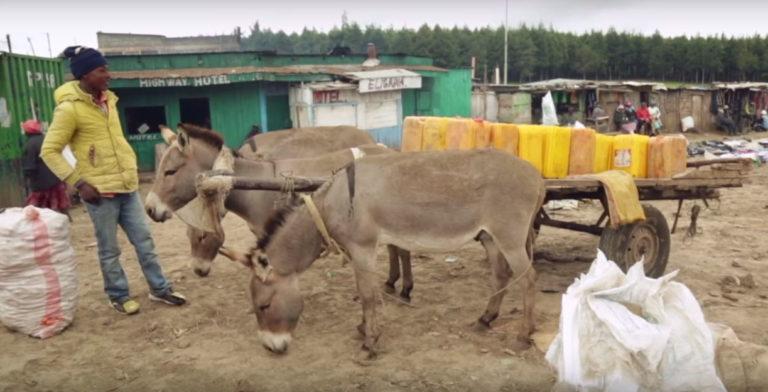 Vidéo : les ânes d'Afrique sacrifiés sur l'autel de la «médecine» chinoise