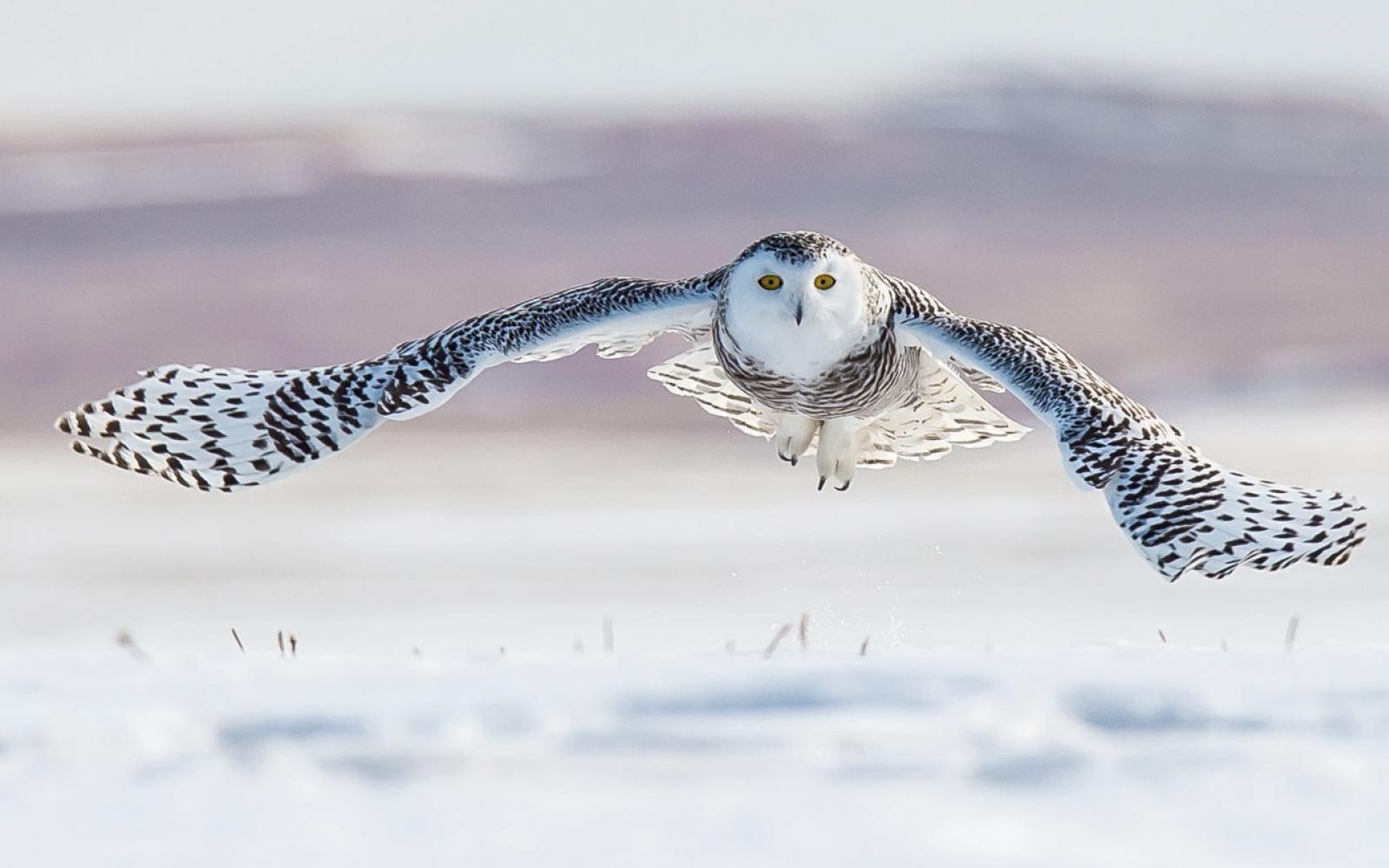 Une nouvelle réserve naturelle en Sibérie
