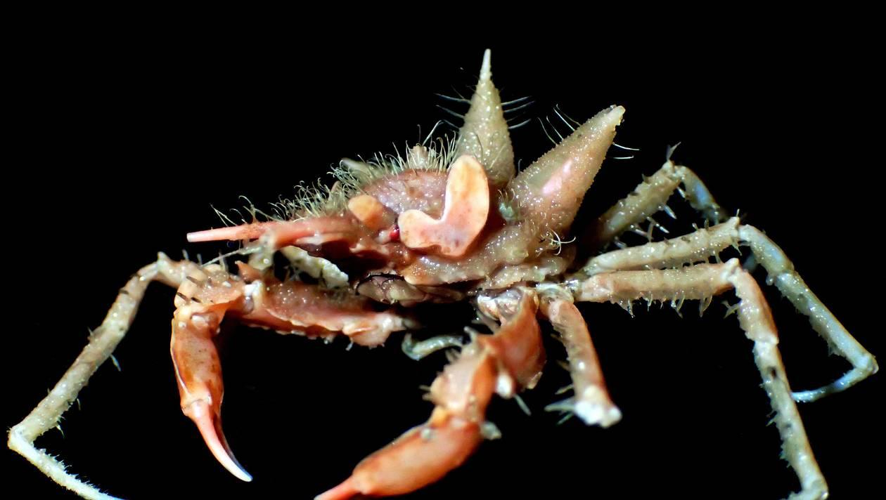 Indonésie. Une dizaine de nouvelles espèces marines découvertes dans les profondeurs