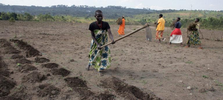 Les paysans nourrissent le monde sans pour autant avoir droit à l'alimentation, dénonce l'ONU