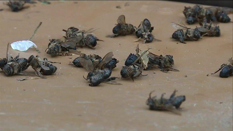 700 ruches mortes en Dordogne fin mars… 3 000 aujourd'hui. Une catastrophe naturelle annoncée