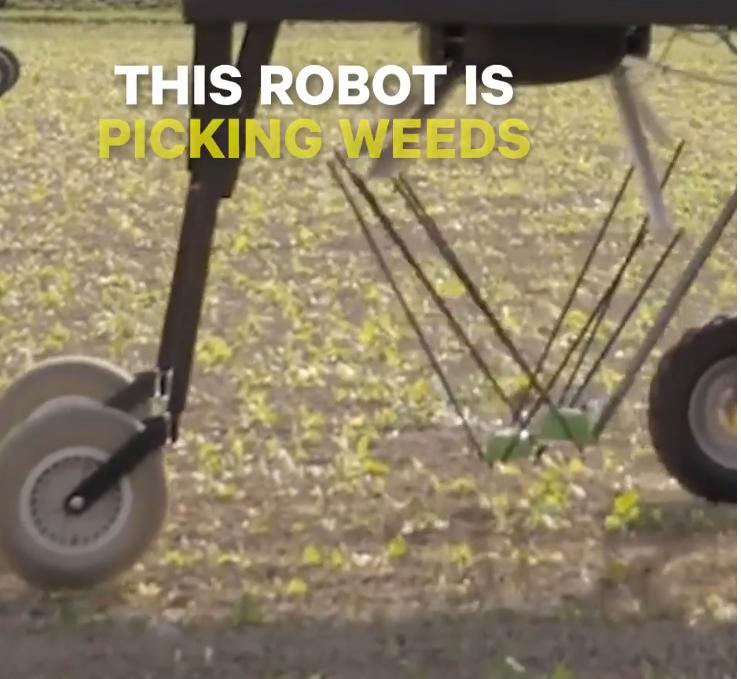 VIDEO : Solar-Powered Robot Pulls Weeds Autonomously