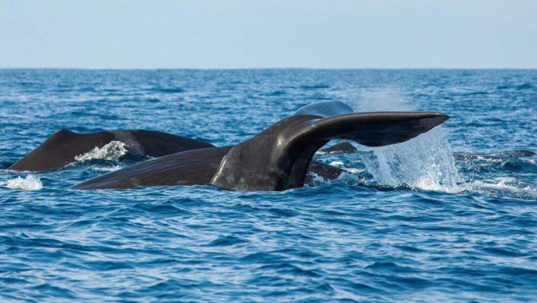 Une baleine meurt après avoir avalé 80 sacs en plastique