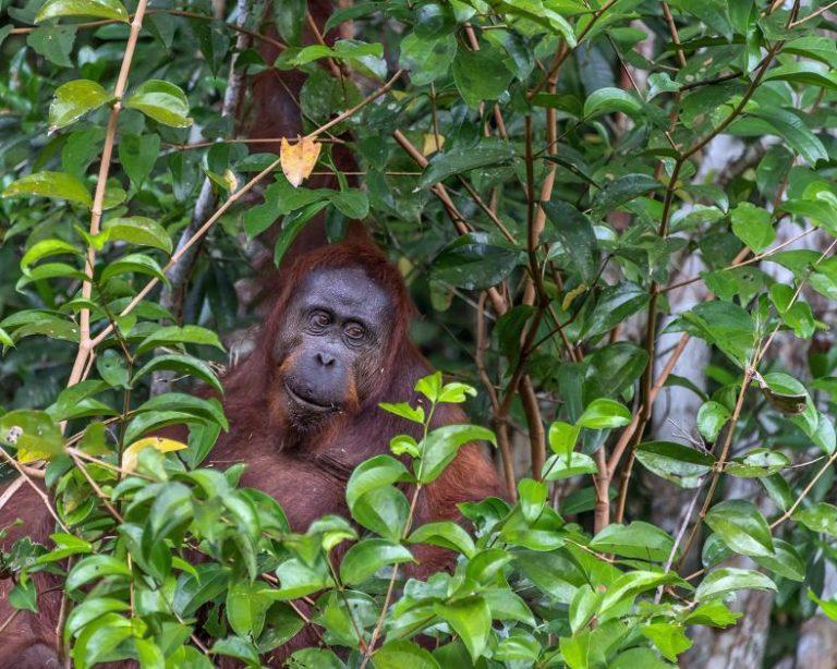 A court terme, les forêts offrent une solution essentielle au changement climatique