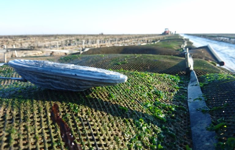 Vendée: Une fausse huître espionne «encore plus performante» pour faire face aux vols