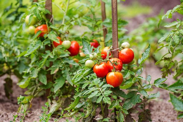 Avec le réchauffement climatique, les légumes vont devenir plus rares