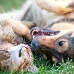 Belgique. Un Code du bien-être animal adopté