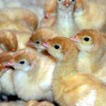 MALTRAITANCE ANIMALE : LA NOUVELLE-AQUITAINE FRAPPE LES ENTREPRISES AU PORTEFEUILLE