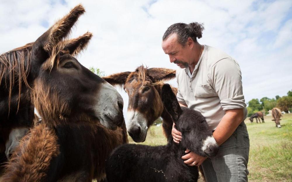Charente-Maritime : un paysan bio plombé par l'État et proche de la faillite