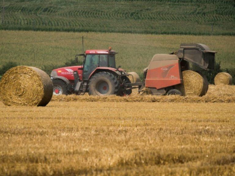 Le génome du blé est séquencé, un espoir pour une agriculture plus productive