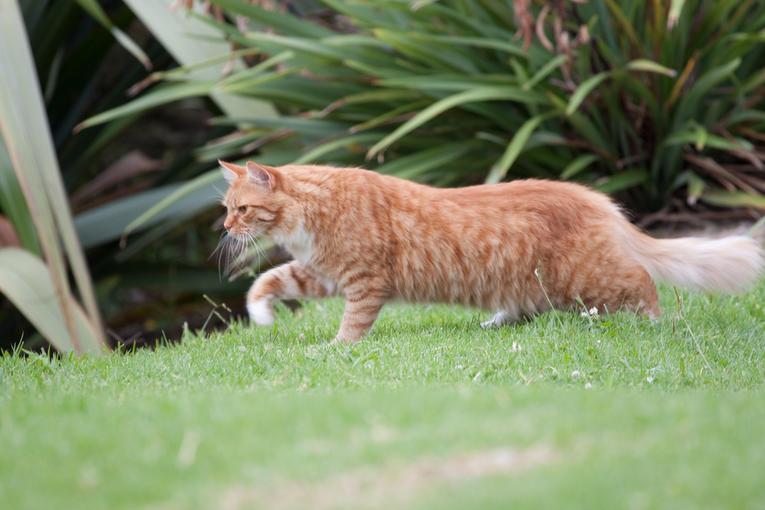 Nouvelle-Zélande. Le village qui veut interdire les chats