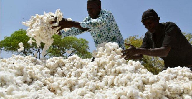 Jugement Monsanto : en Afrique, la fin du glyphosate n'est pas pour demain