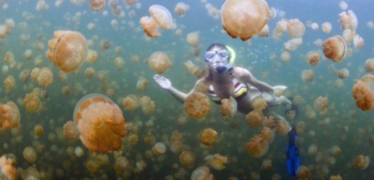 Pour sauver les poissons, mangez des méduses