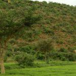 Il est temps de procéder à une restauration des terres à grande échelle pour progresser sur les Objectifs de Développement Durable, selon un nouveau rapport