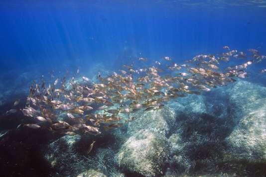 Les émissions de CO2 altèrent l'odorat des poissons