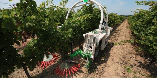 Naïo Technologies : Ted, le nouveau robot pour entretenir les vignes