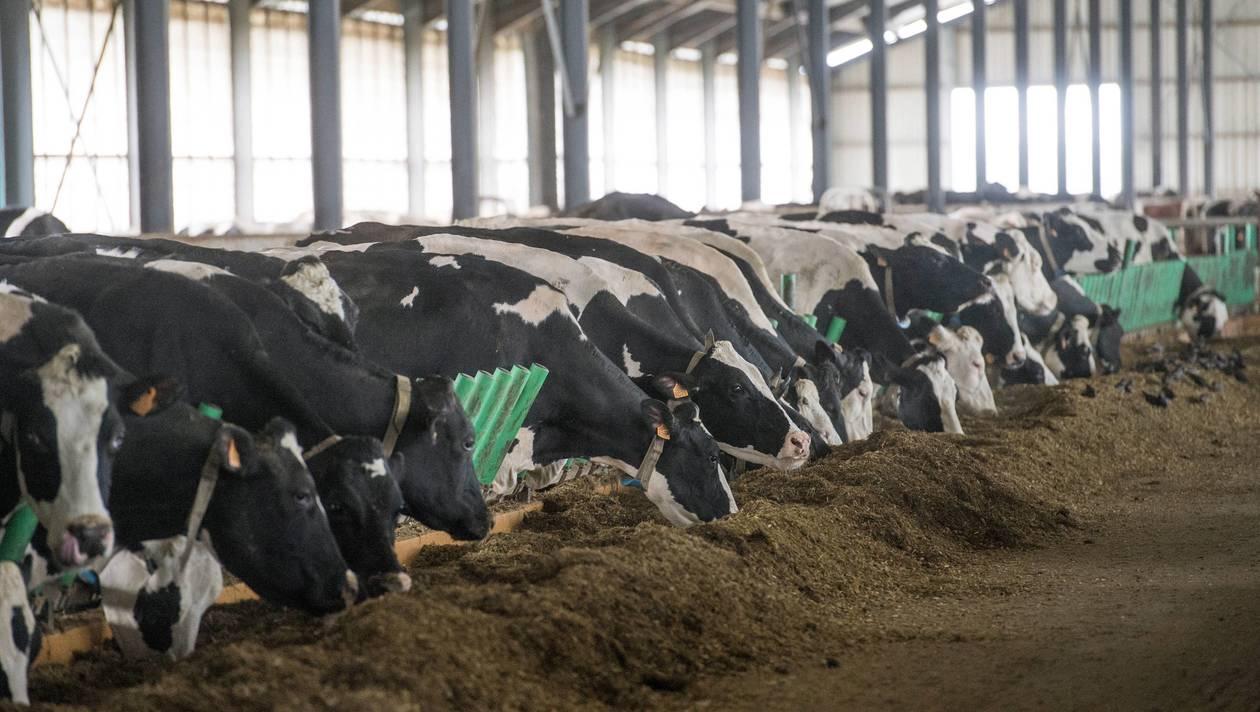 Ferme des «1000 vaches». Des militants condamnés à verser 120 000 €