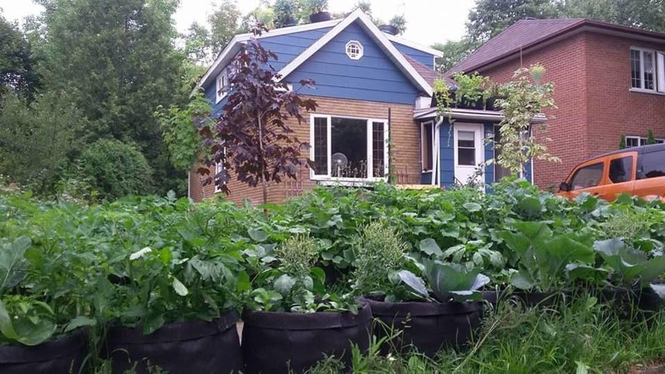Appui massif au cultivateur urbain mis à l'amende par la Ville de Québec