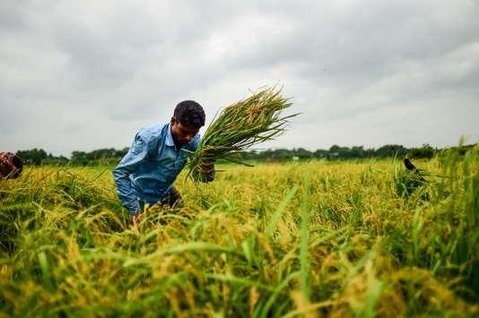 Le réchauffement favorise le ravage des récoltes par les insectes nuisibles