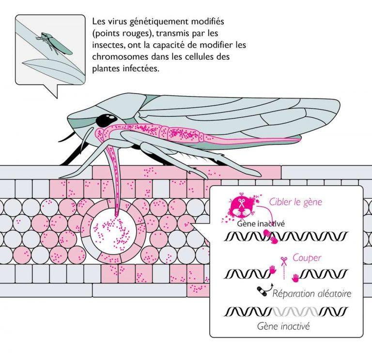 Des insectes porteurs de virus : un projet américain qui inquiète des scientifiques
