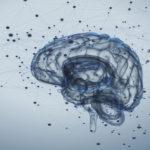 Des chercheurs créent un réseau de trois cerveaux permettant de partager ses pensées