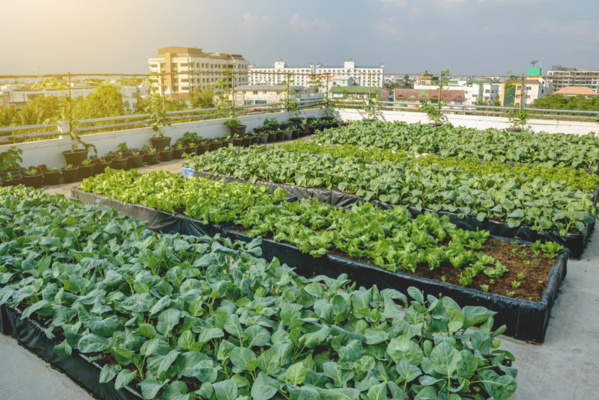 La grande distribution mise sur l'agriculture urbaine
