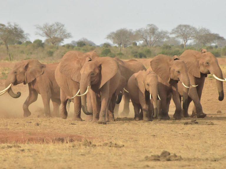 Les populations d'animaux sauvages ont décliné de 60% en 44 ans