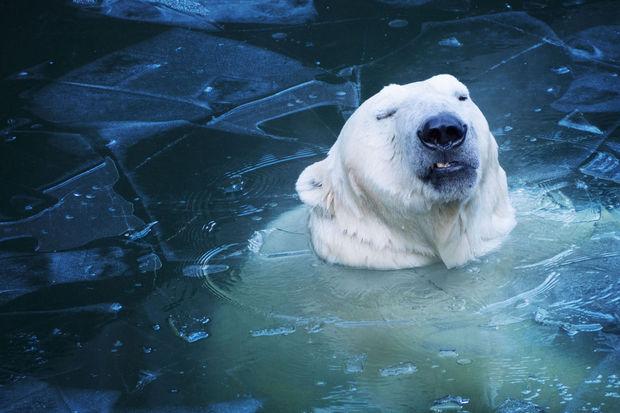 Changement climatique: «Les années à venir seront les plus déterminantes de notre histoire»