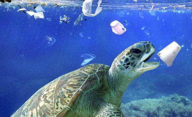 Plastiques : les 28 Etats membres de l'UE pour l'interdiction des produits à usage unique