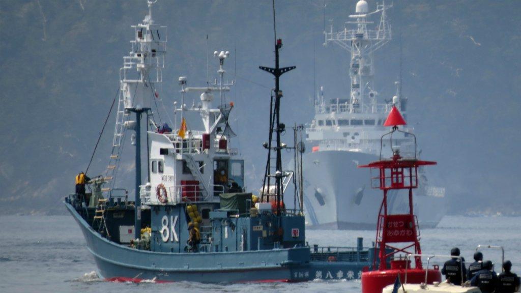 Le Japon quitte la Commission baleinière internationale pour relancer la pêche commerciale à la baleine