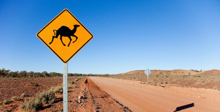 Australie : la vague de chaleur décime des milliers d'animaux