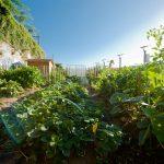 Les pesticides chimiques pour les jardiniers amateurs sont désormais interdits