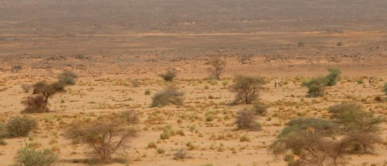 Au Sahara, les énergies renouvelables pour reverdir le désert