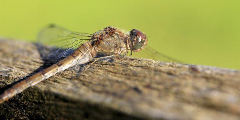 Une loi pour protéger les insectes ? L'Allemagne y pense