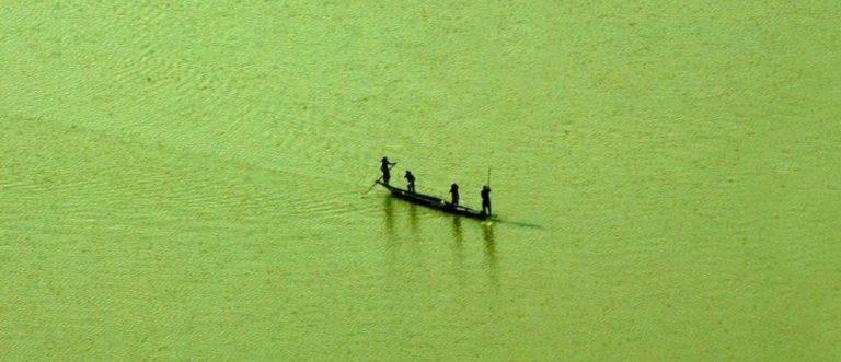 La Terre devient plus verte : bonne ou mauvaise nouvelle ?