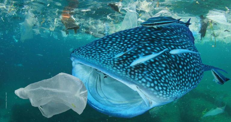 Rien ne fonctionnerait concernant les solutions face à la pollution plastique !