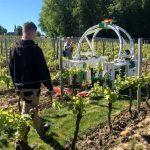 Ted, le robot-vigneron écolo pour remplacer le glyphosate dans les vignes de Monbazillac