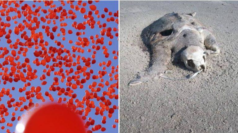 Pourquoi les lâchers de ballons sont nocifs pour les animaux et l'environnement