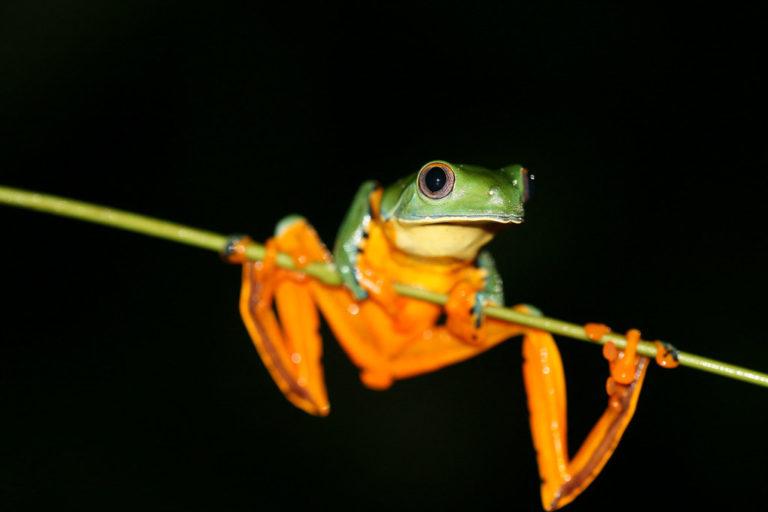 Un million d'espèces sont menacées d'extinction, alerte un groupe d'experts