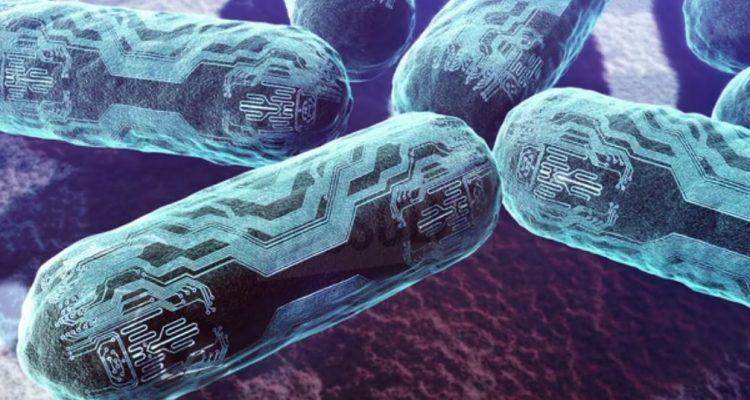 Des nano-organismes artificiels contrôlés par la lumière transforment le CO2 en bioplastique et biocarburant