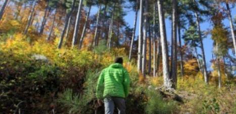 100 millions pour replanter les forêts en 2016