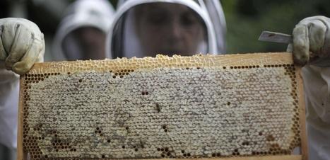 3 ans après l'hécatombe, les apiculteurs pyrénéens cherchent toujours à comprendre ce qui a tué leurs abeilles