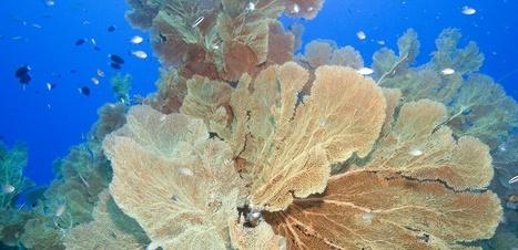 4% seulement de la surface de l'océan est protégée