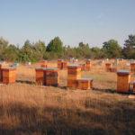 Abeilles domestiques et biodiversité: Pourquoi avoir un rucher?